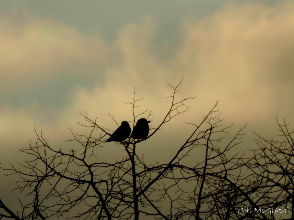 2015 02 04 sunset love birds jpg sig
