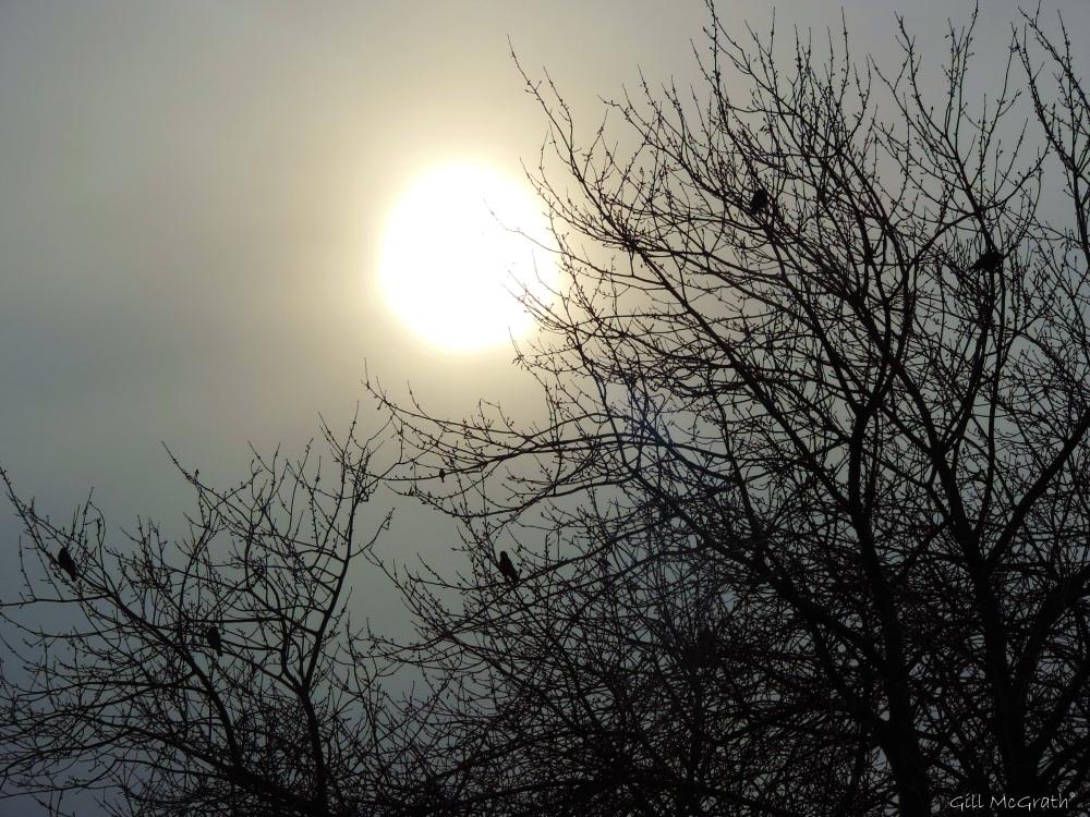 2015 02 05  winter sun jpg sig