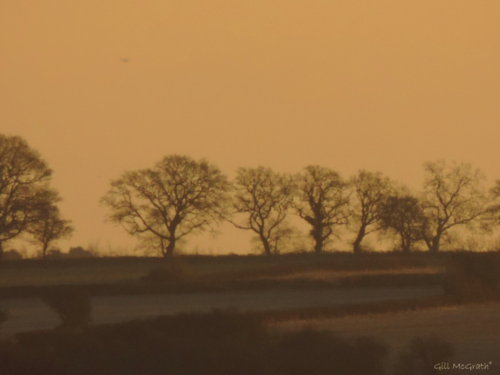 2015 02 06 morning sequence brown 3 8 05 am  jpg sig