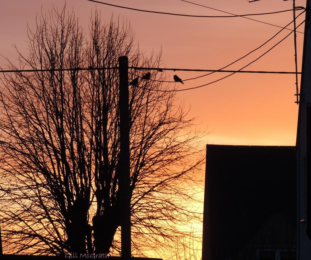 2015  02 07 02 sunrise 1 7 .30am jpg sig