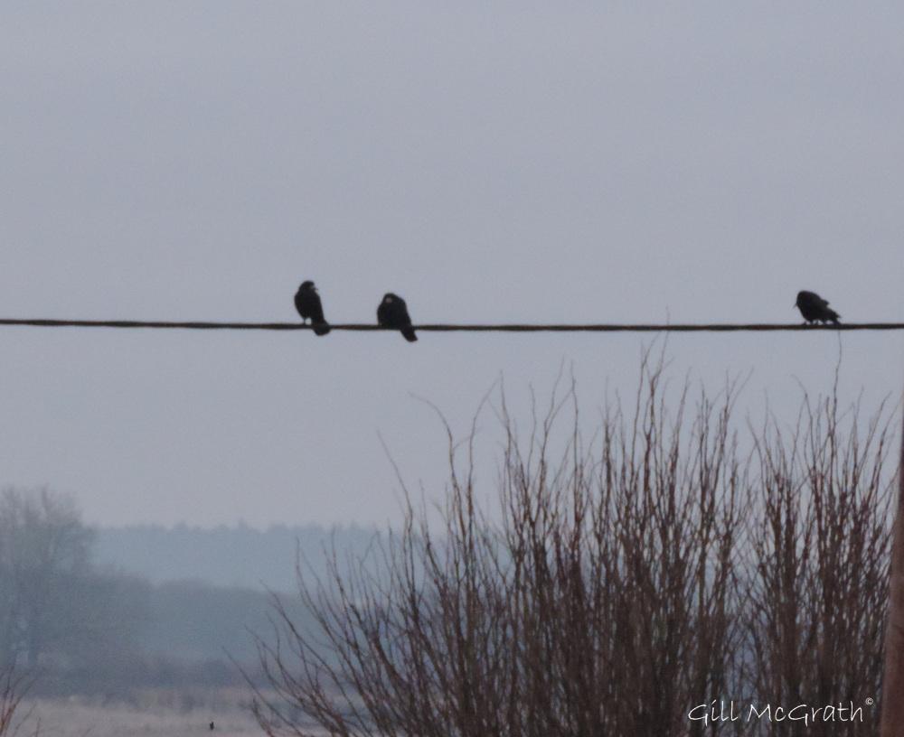 2015 02 07 bird line 1 jpg sig