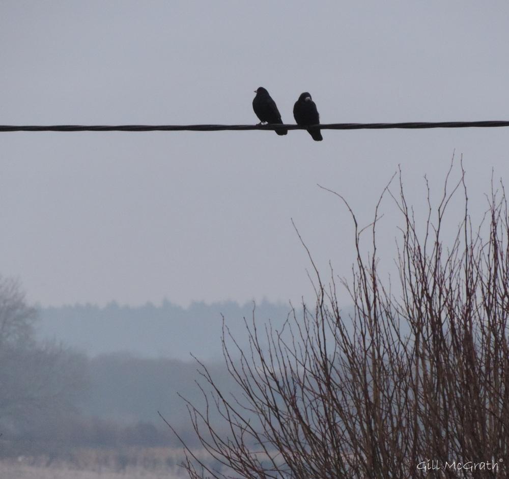 2015 02 07 bird line 2 jpg sig