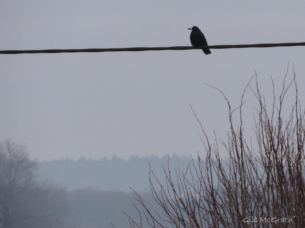 2015 02 07 bird line 3 jpg sig