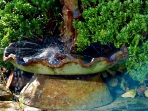 2015 02 10  bird bath jpg sig