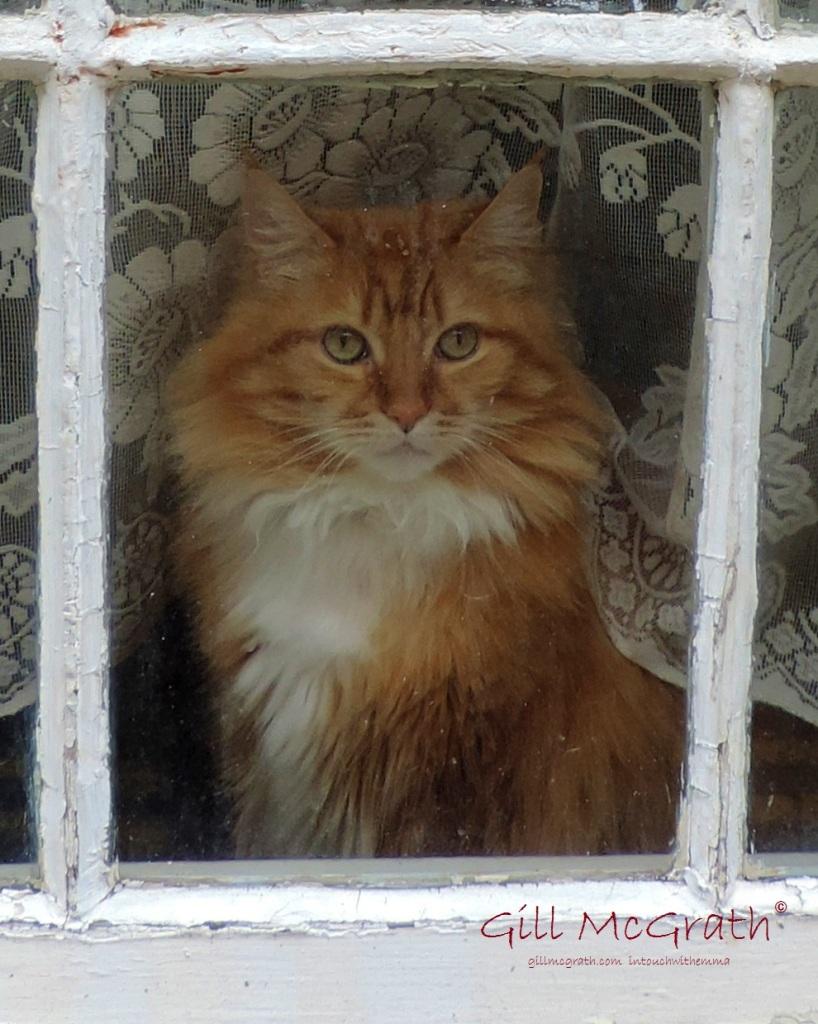 2015 02 11 cat in a window jpg sig
