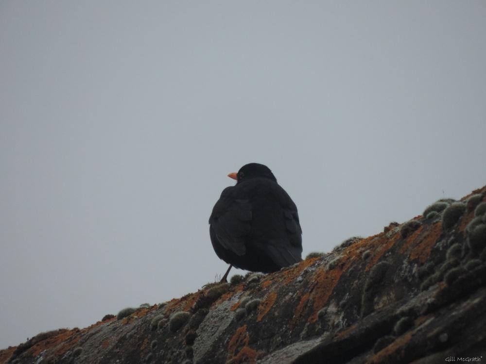 2015 02 12 bird on roof jpg sig