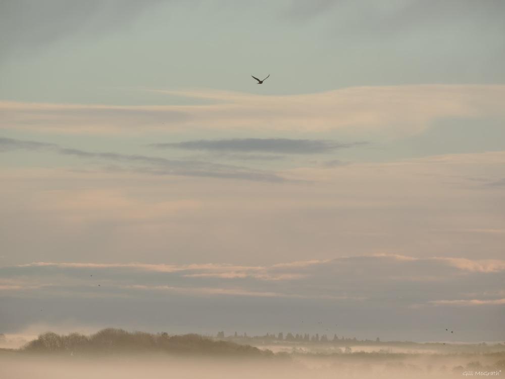 2015 02 14 birds in mist jpg sig