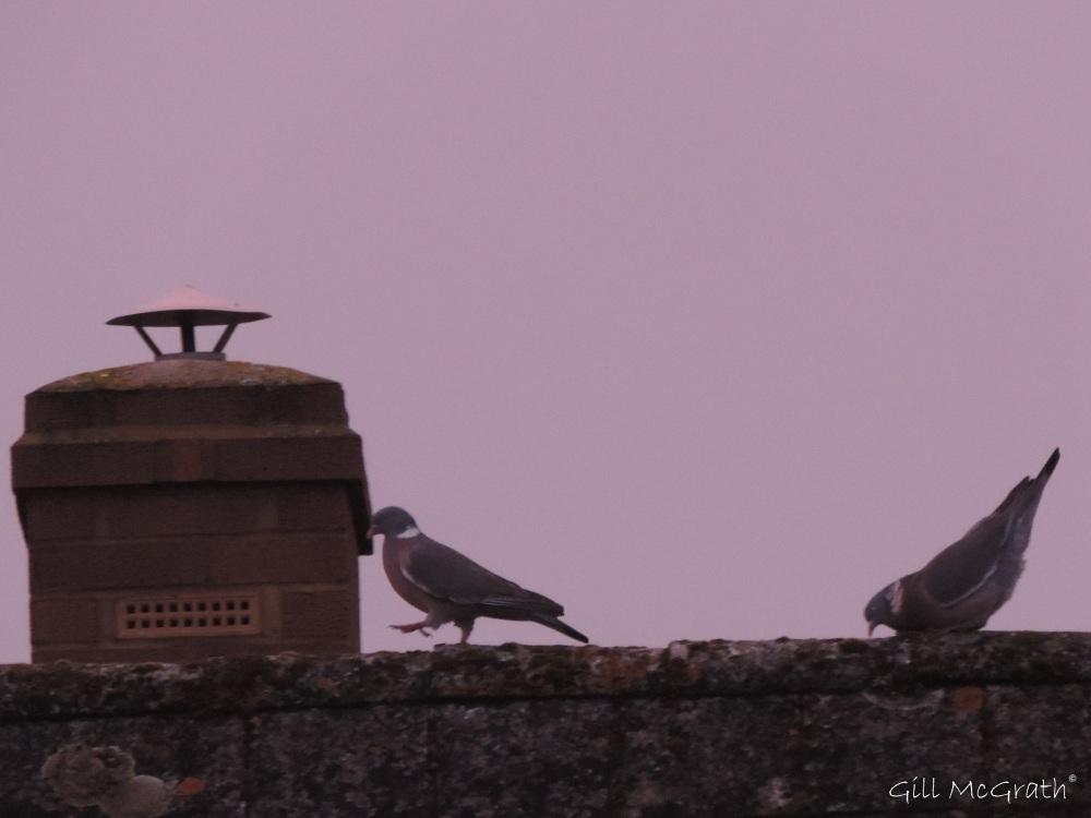 2015 02 16 birds roof strut jpg sig