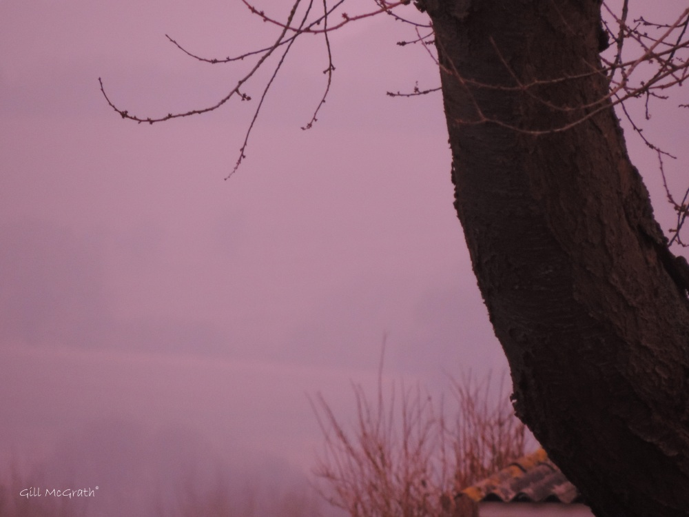 2015 02  16 on the edge of pink 1  7.23 am jpg  sig