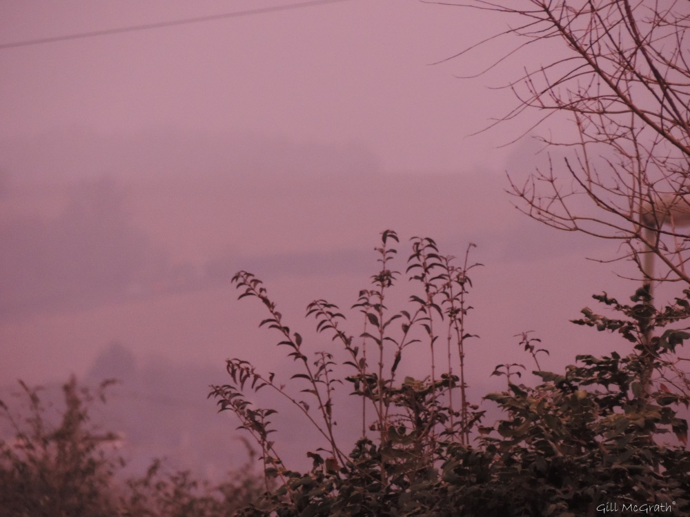 2015 02 16 on the edge of pink 2 jpg sig
