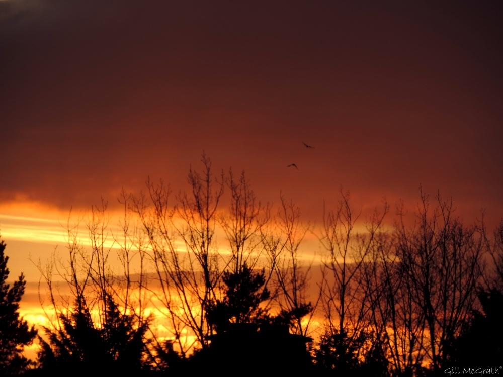 2015 02 17  5 25  sunset jpg sig