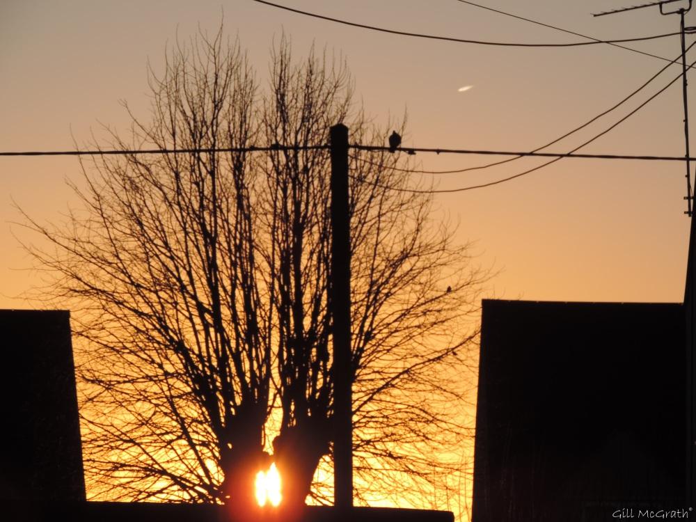 2015 02 17 bird in my view 3 jpg sig