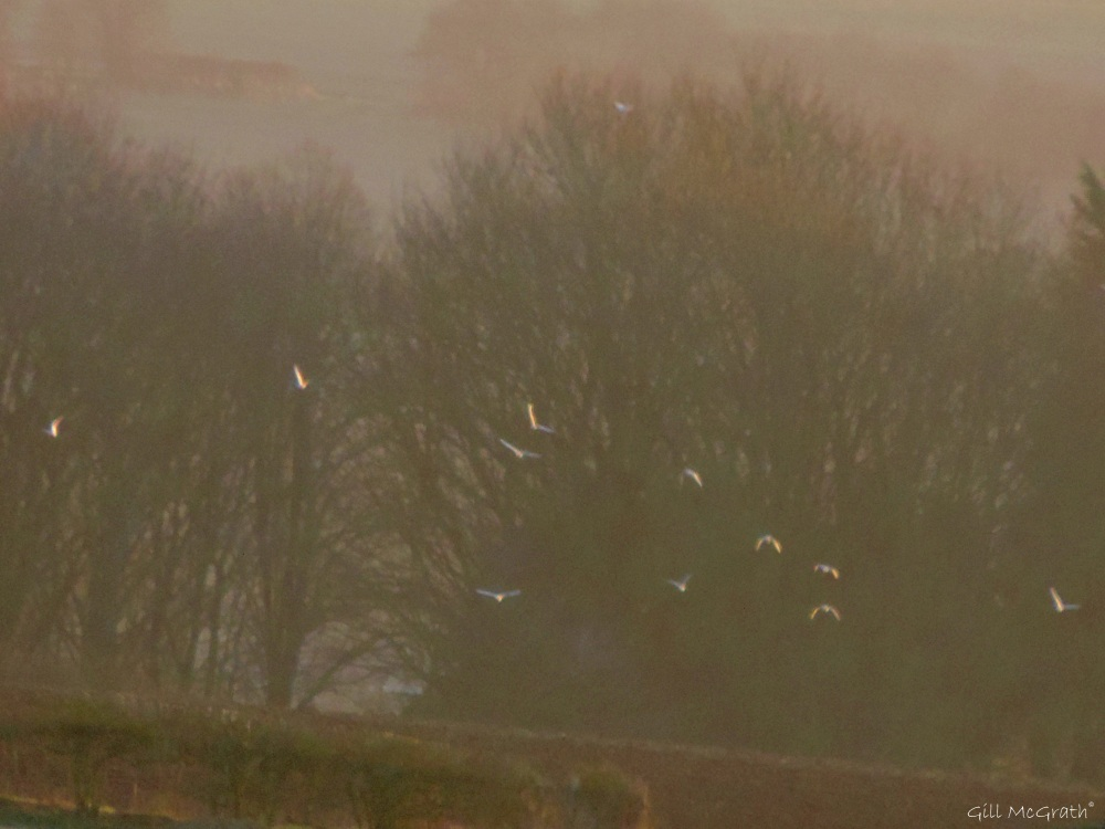 2015  02 17 birds in my view 4 jpg sig