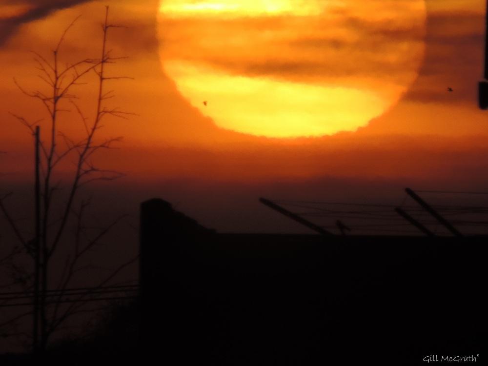 2015 02 18 726  Nells washing line sunrise jpg sig