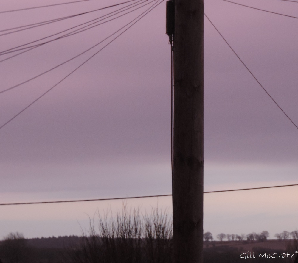 2015 02 19 pole waiting for morning purple jpg sig