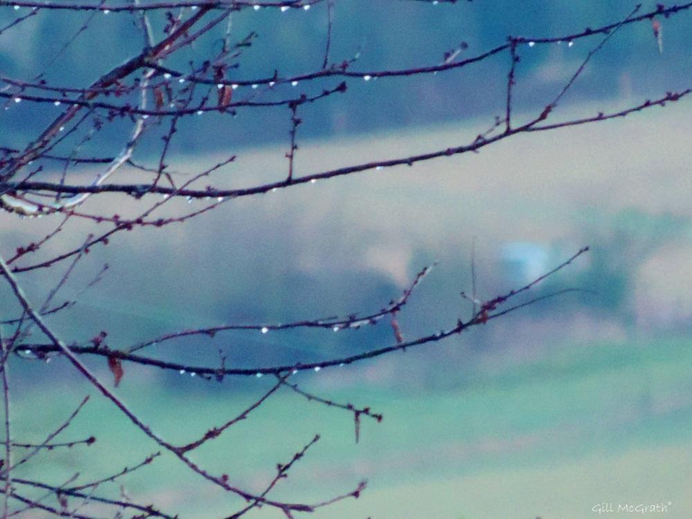 2015 02 22 rain jpg sig