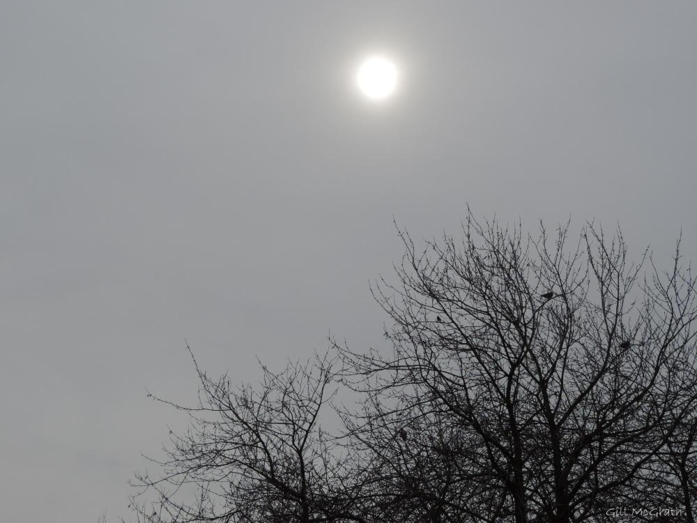 2015 02 22 watery sun 1015 jpg sig