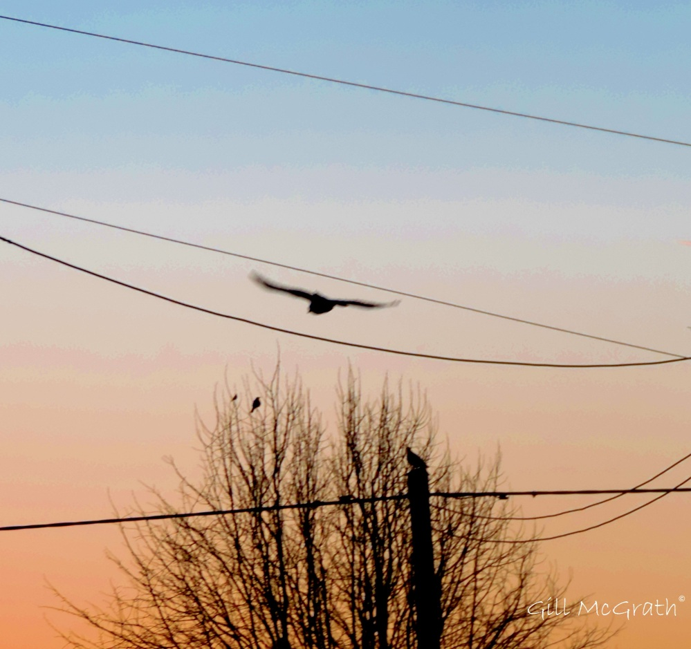 2015 02 27 birds jpg sig