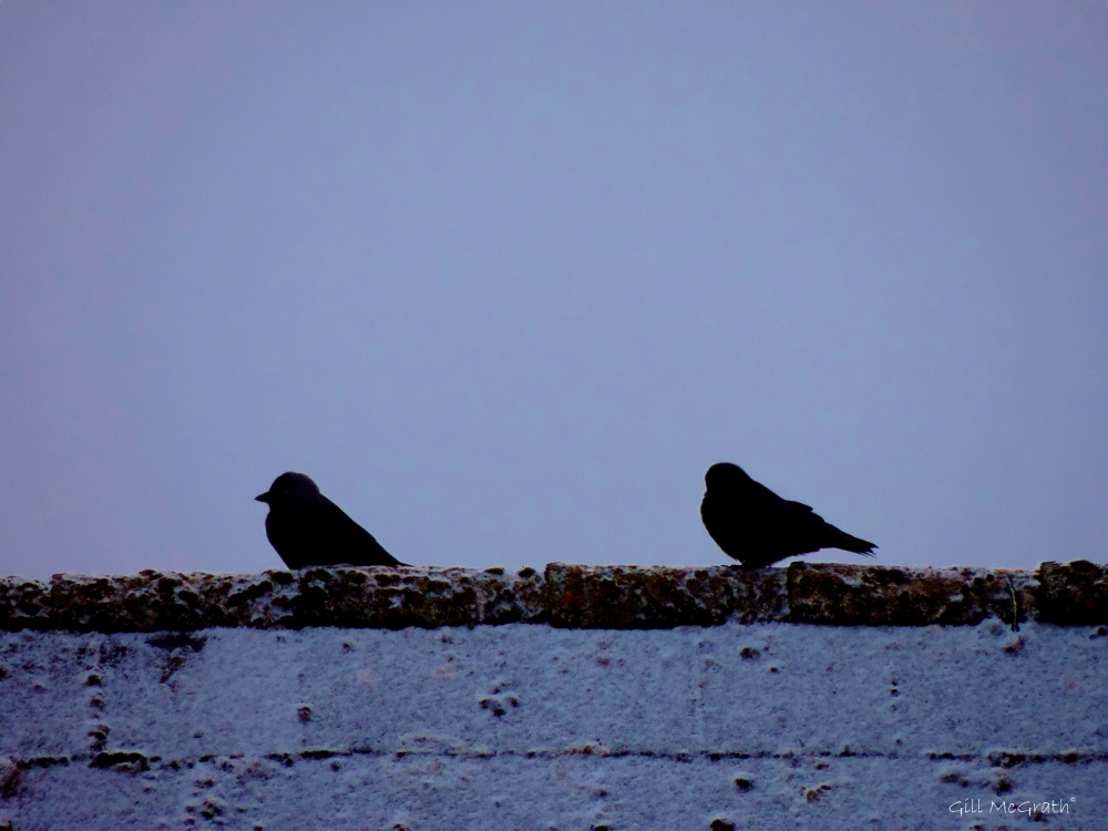 2015 0203 twobirds on roof snow morning jpg sig