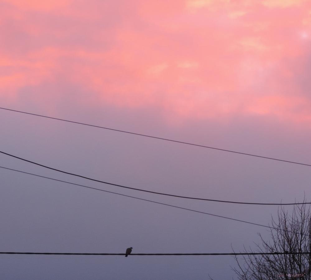 2015 03 02 bird in pink this morning jpg sig