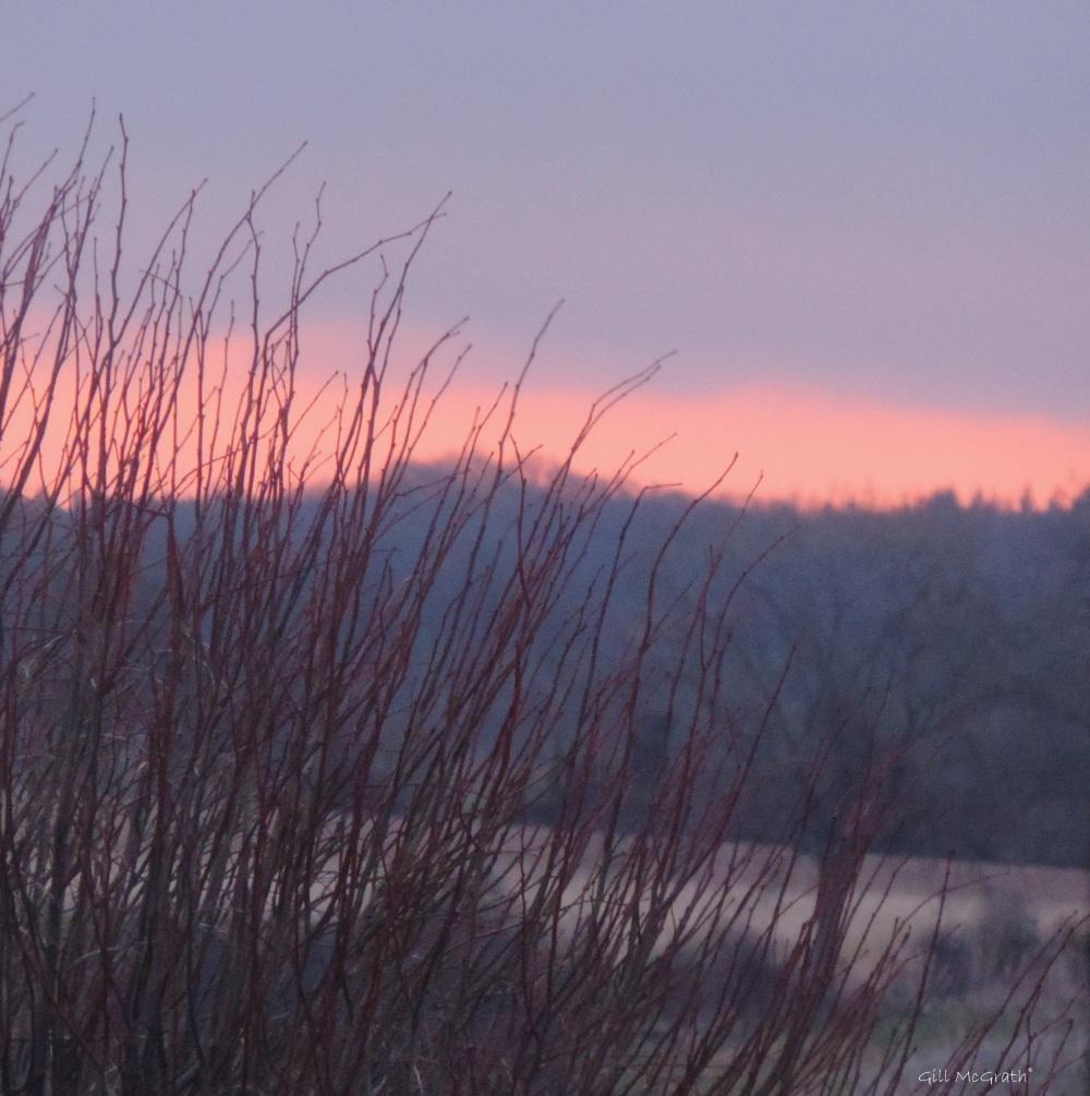 2015 03 02 purple light this morning before 7 jpg sig
