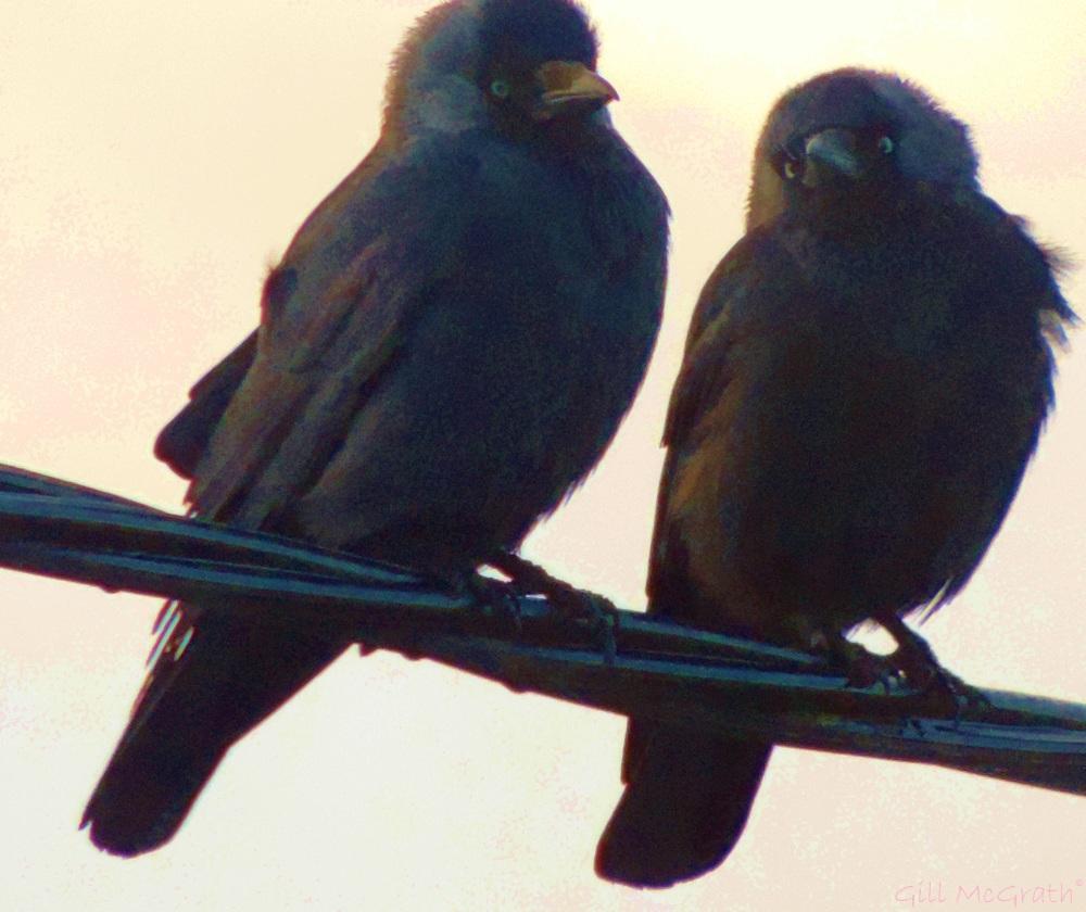 2015 03 03 two birds jpg sig
