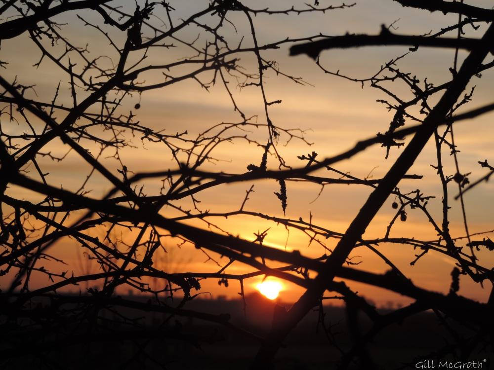 2015 03 05 behind hedge sun jpg sig