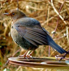 2015 03 06 bird 2 jpg sig