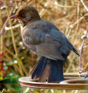 2015 03 06 bird 3 jpg sig