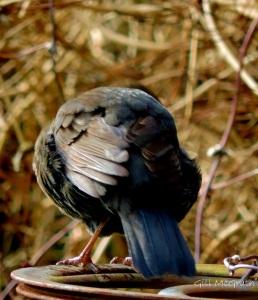 2015 03 06 bird jpg sig