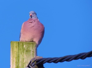 2015 03 07 pink is the colour 2 jpg sig