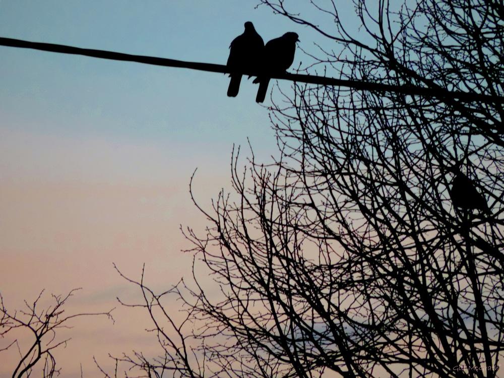 2015 03 09 631 morning birds jpg sig