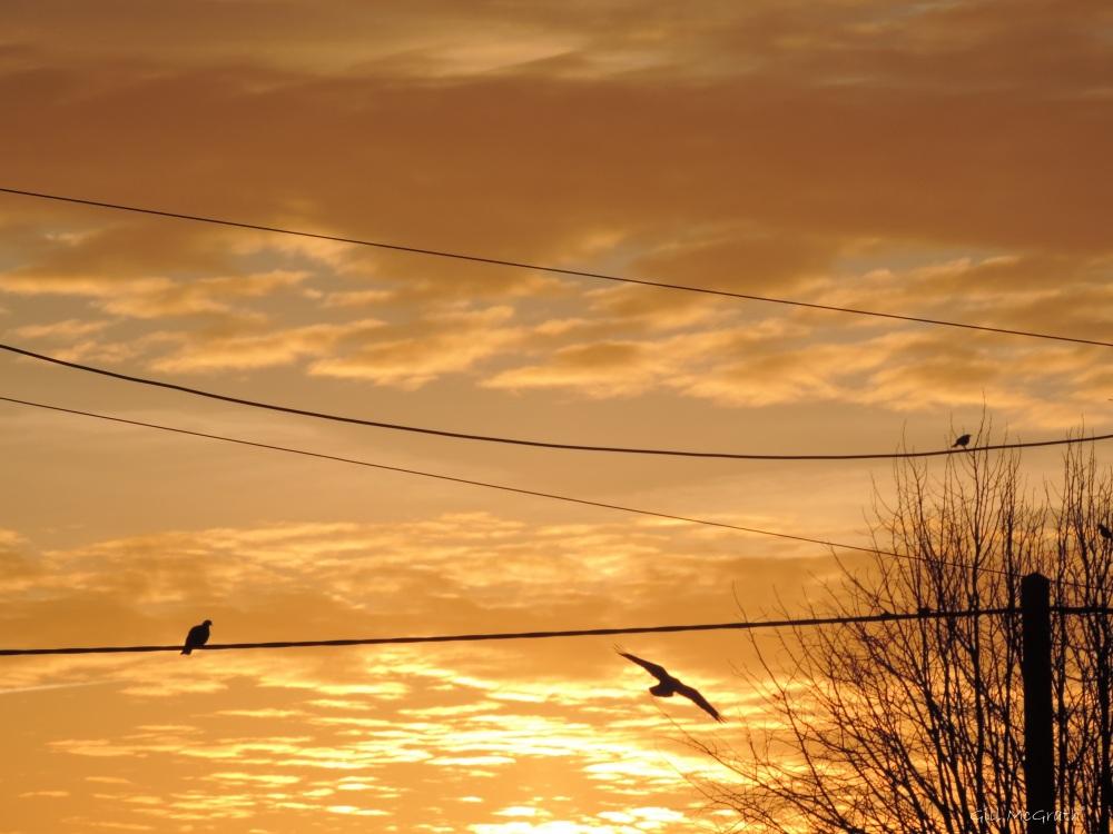 2015 03 09 653  bird 653  on the wires jpg sig