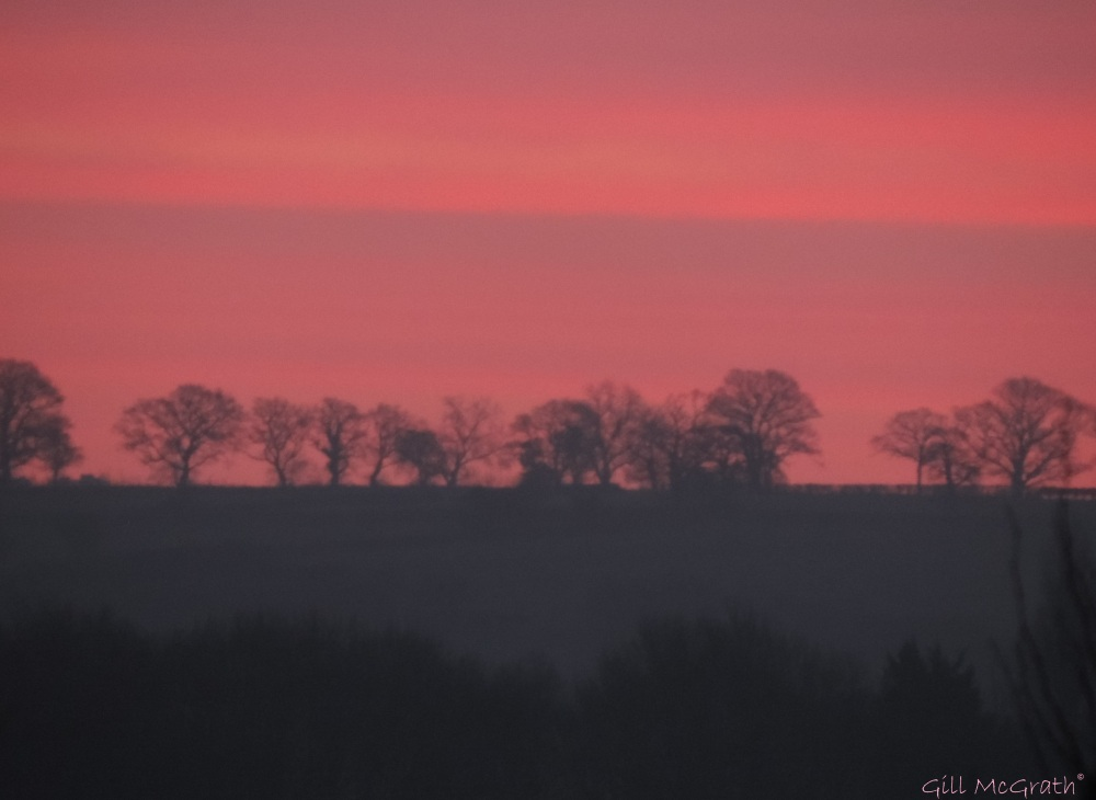 2015 03 11 1 608 pink 13 trees before morning jpg sig