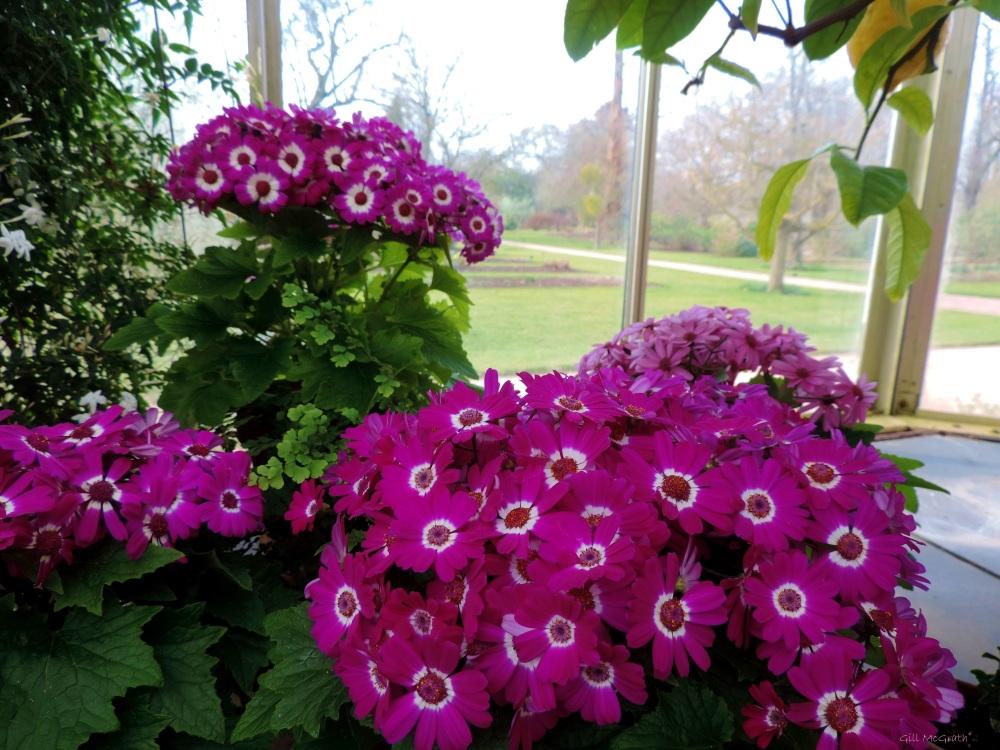 2015 03 12 flowers indoors jpg sig