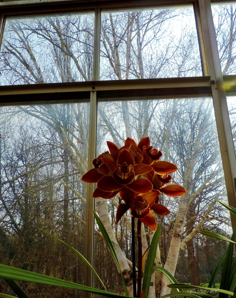 2015 03 12 orchid indoors jpg sig