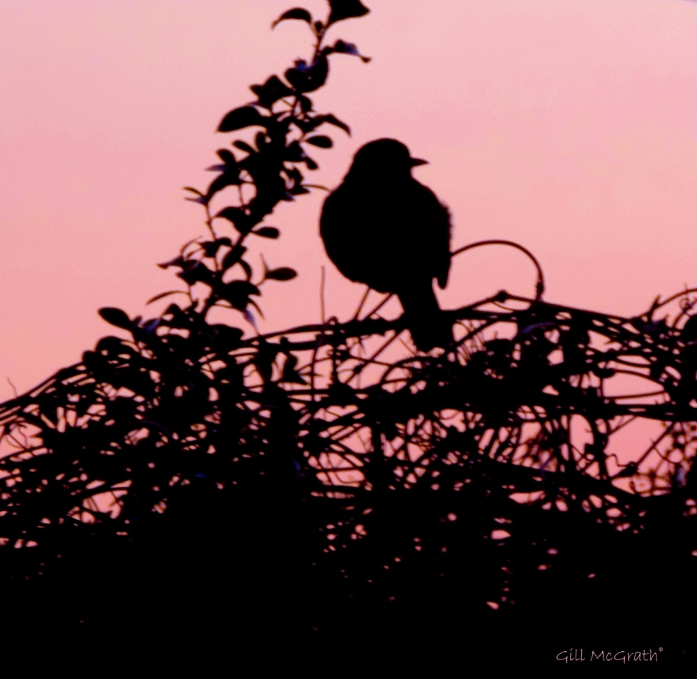 2015 03 13 bird observing sunset jpg sig
