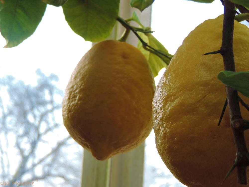 2015 03 13 squeeze of lemon jpg sig