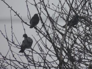 2015 03 16 movement edge of green 4 birds jpg sig