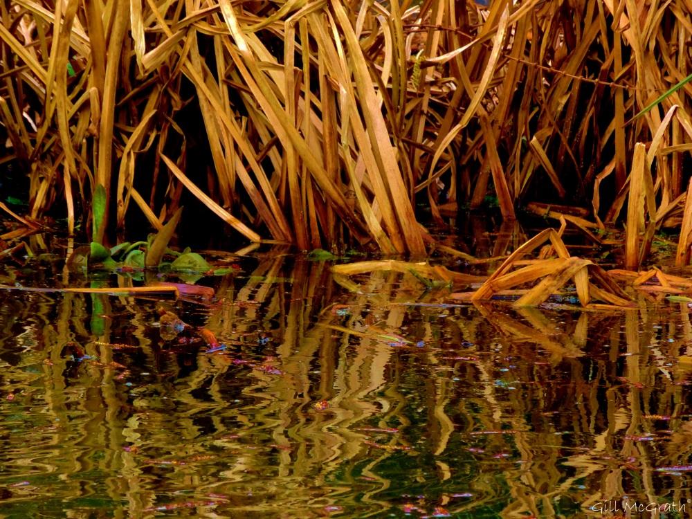 2015 03 16 water edge 1  jpg  sig