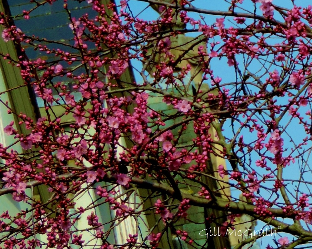 2015 03 18 blossom jpg sig