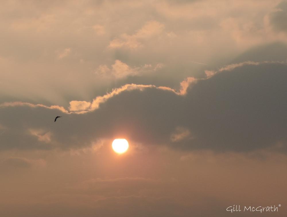 2015 03 18 powder puff sun 530 jpg sig