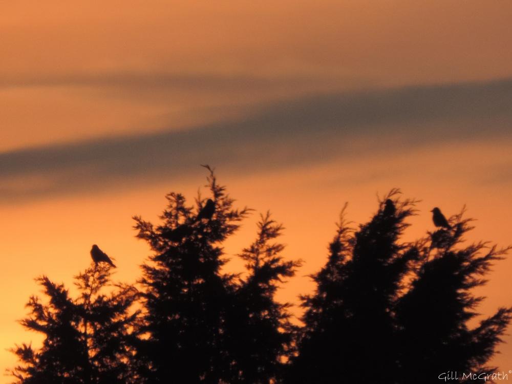 2015 03 20 birds more jpg sig