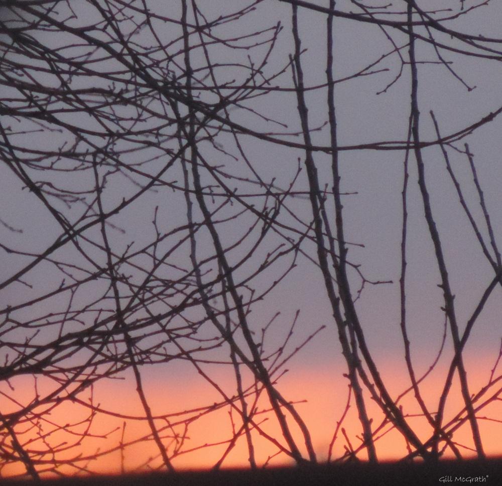 2015 03 20 pink morning strings jpg sig