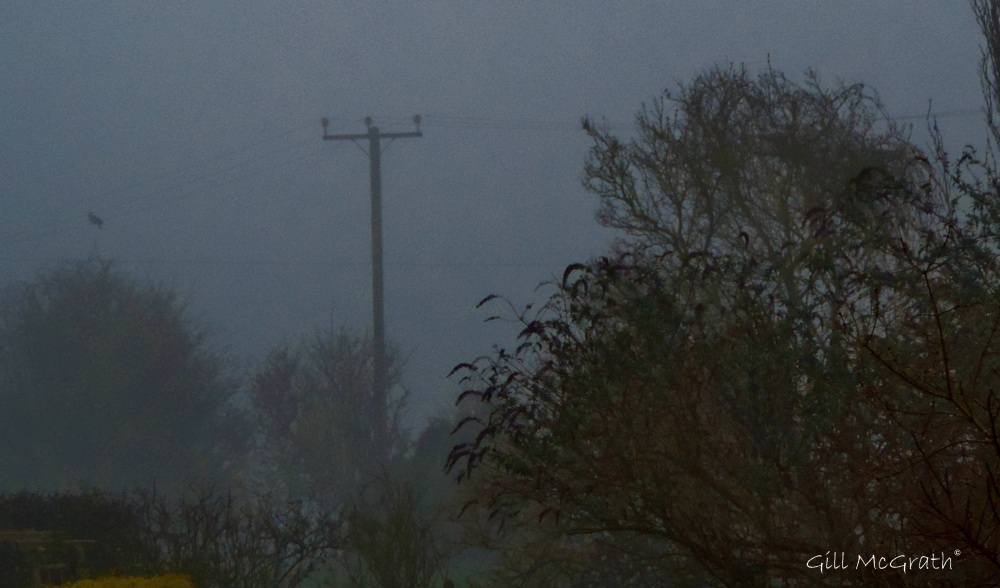 2015 03 23 1 bird in a mist by a pole jpg sig