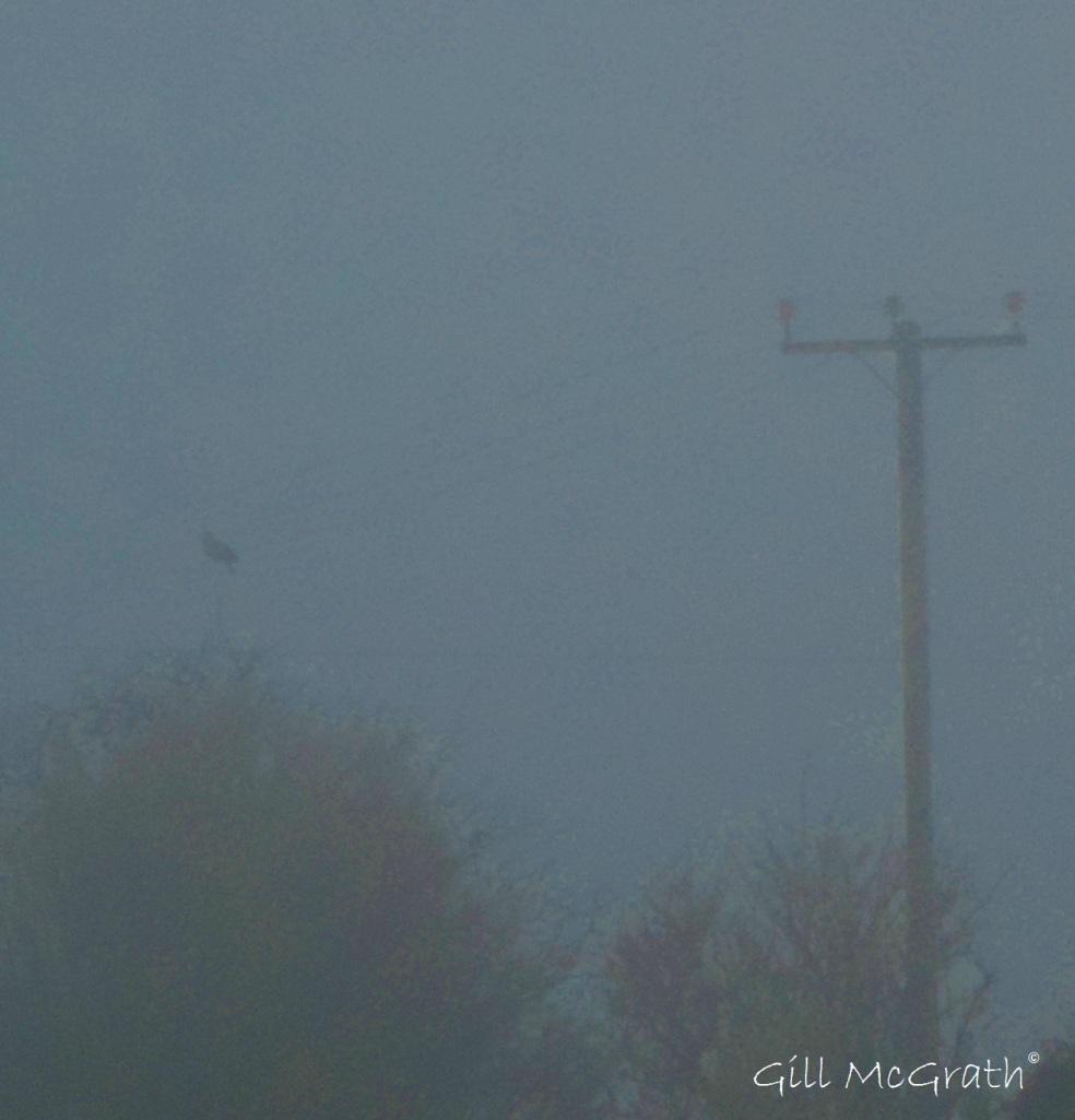 2015 03 23 2 bird hiding in a mist jpg sig