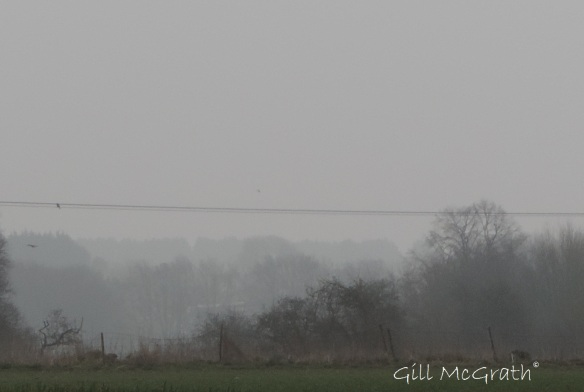 2015 03 23 5 mists where they sit  field jpg sig