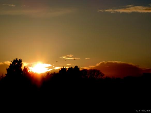 2015 03 24 1810 sunset jpg sig