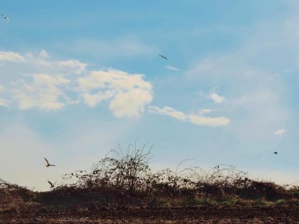 2015 03  24 birds field edge   jpg sig