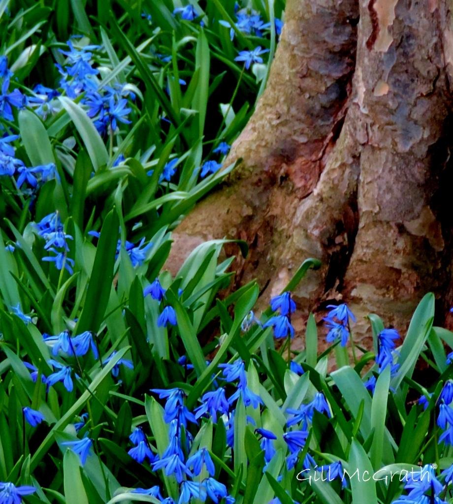 2015 03 25 blue flowers jpg sig